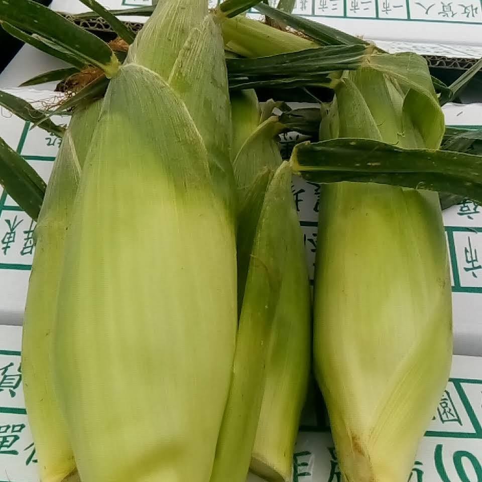 高雄玉米批發