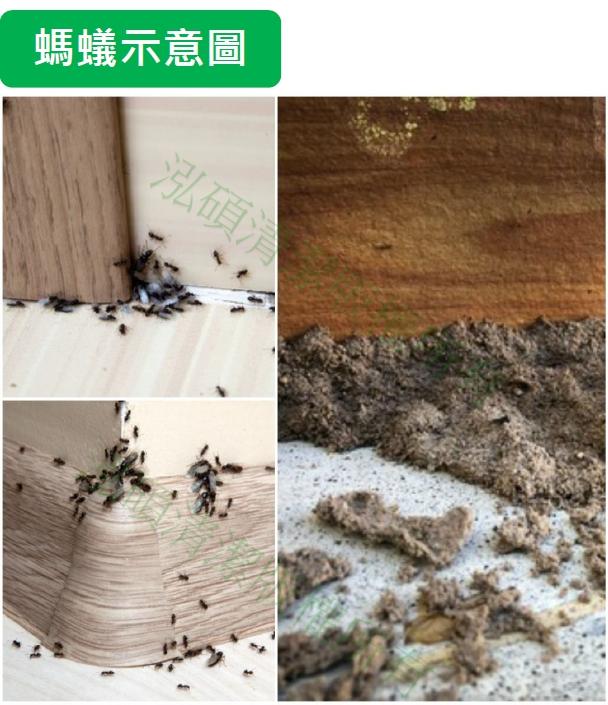 螞蟻絕凝膠餌劑、終絕蟻家