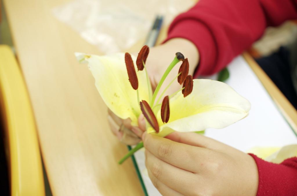 生物花朵認識