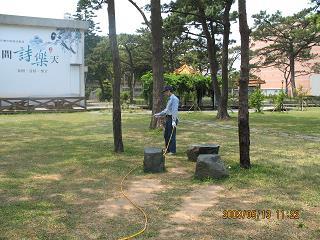 花園樹木土壤白蟻施工