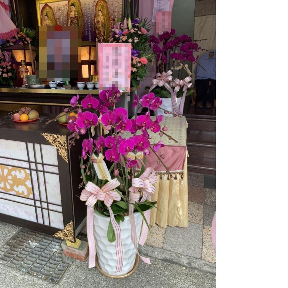 9株蘭花 / 盆