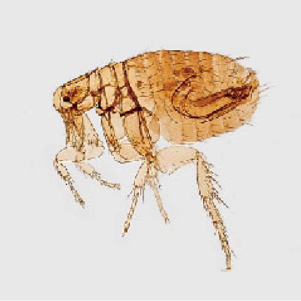 狗狗感染寄生蟲怎麼辦