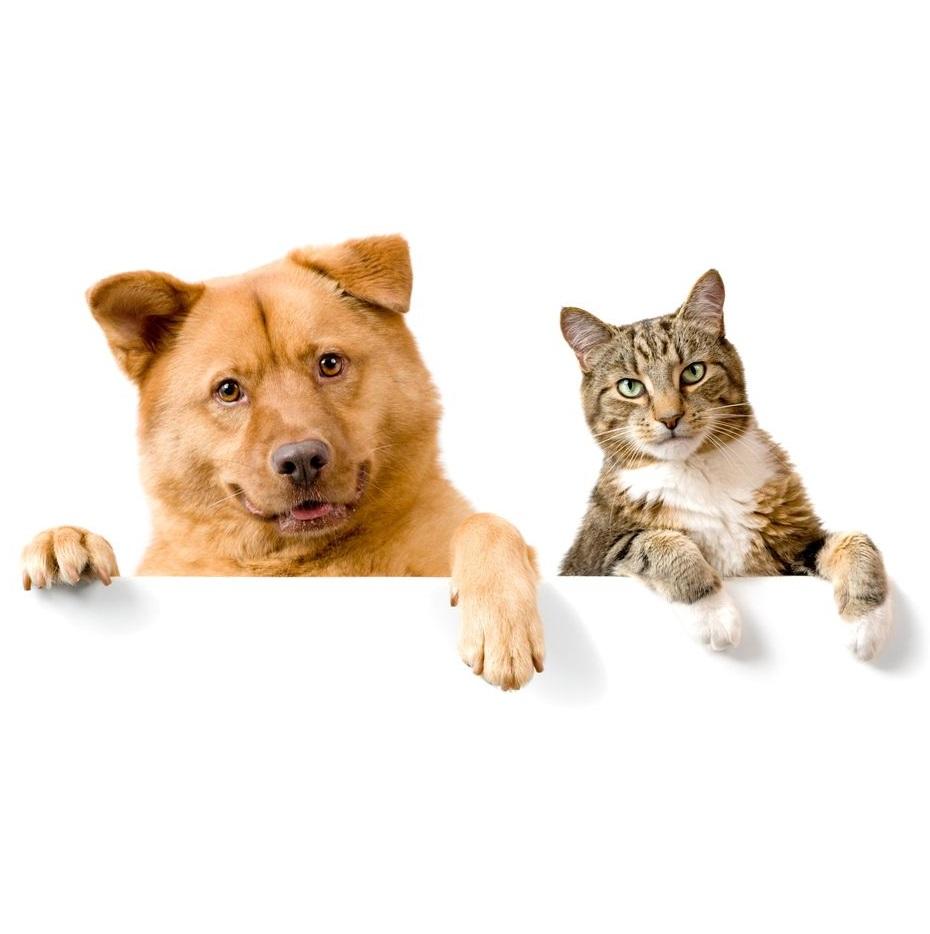 寵物麻醉前要做檢查嗎