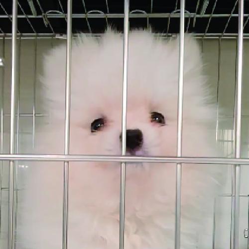 買狗狗寵物店❤️ 白