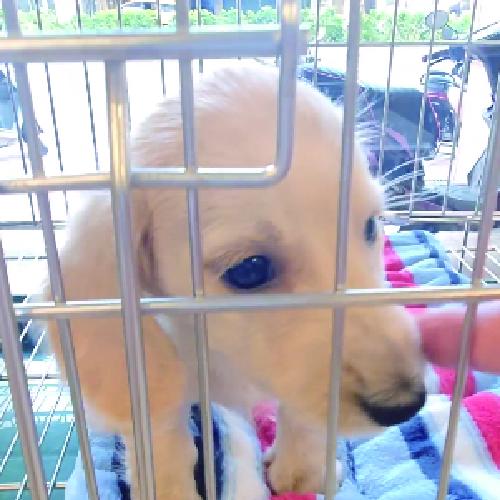 買狗狗寵物店❤️ 臘腸寶寶❤️ 剩弟弟呦