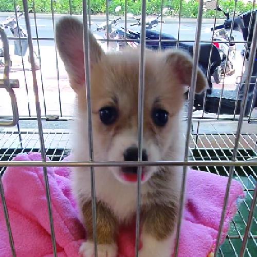 買狗狗寵物店❤️ 黃