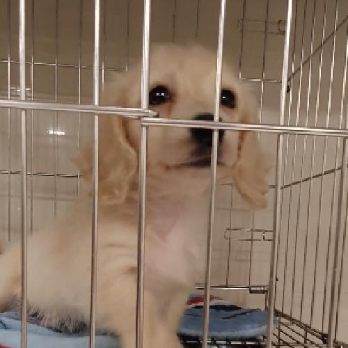 買狗狗寵物店❤️ 奶