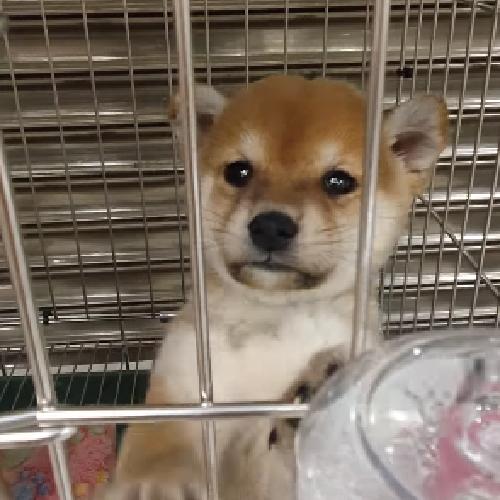 買狗狗寵物店❤️ 萌