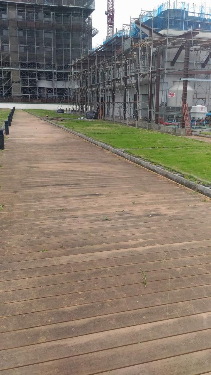 淡水郵政大樓頂樓定期除草工程